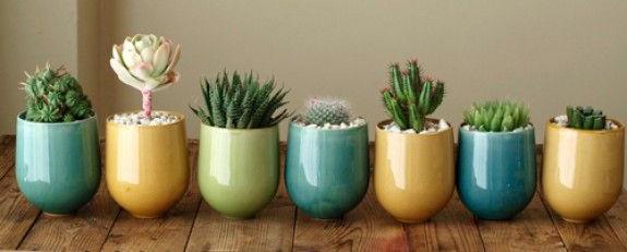kaktus-saksilari