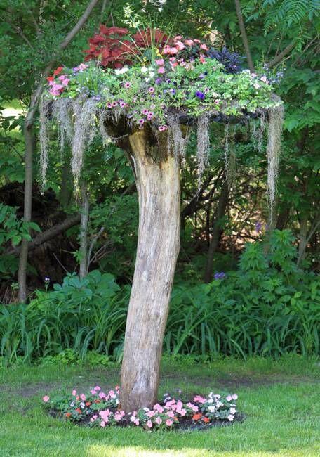 ağaç kütüğünden saksı