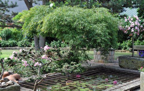 Beautiful İlk Ev Peyzaj Bahçe için  Bitki Seçimi İpuçları