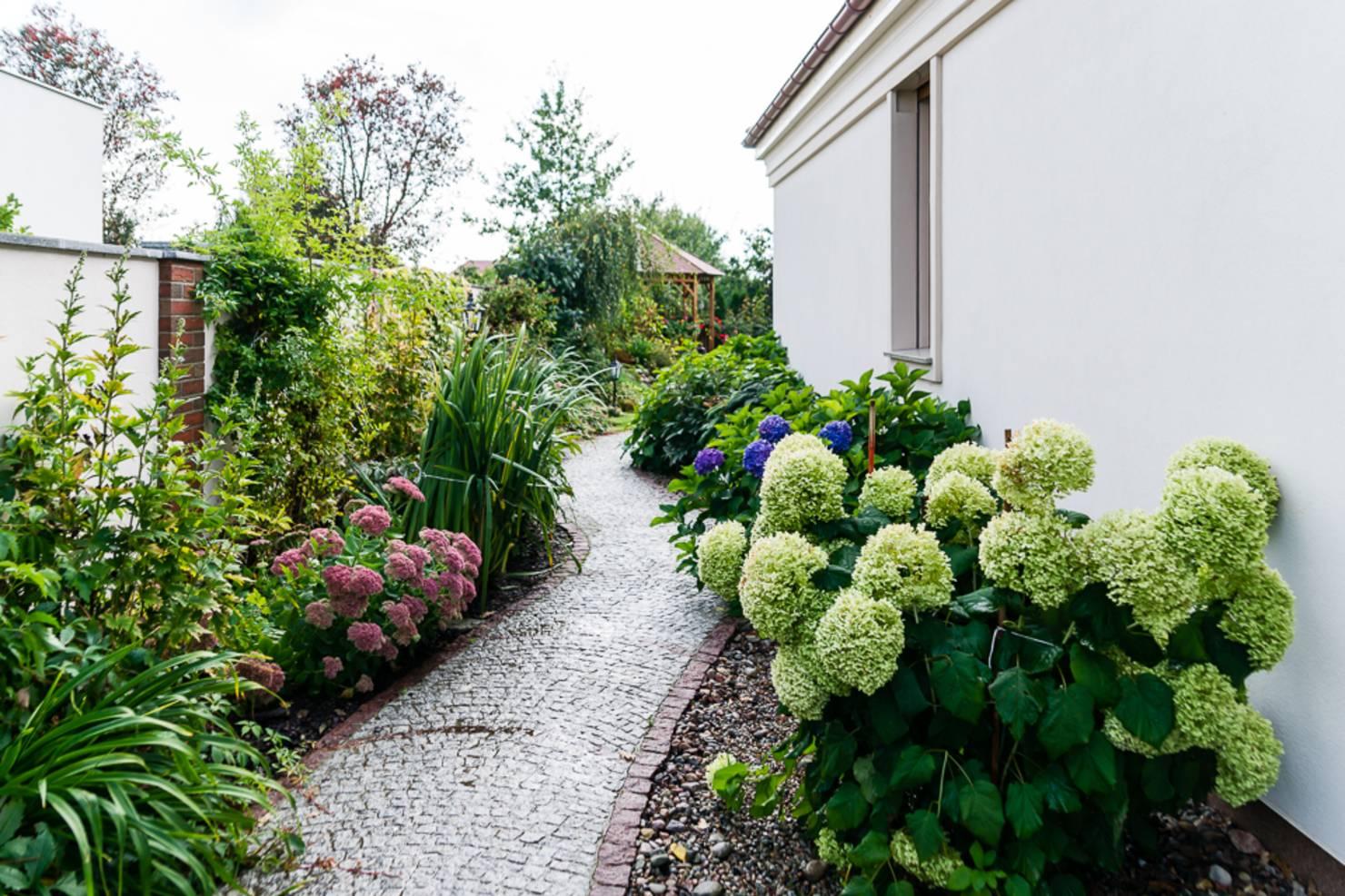 Compact Bahçenin Ev Peyzaj Bahçe için  Bitki Seçimi İpuçları