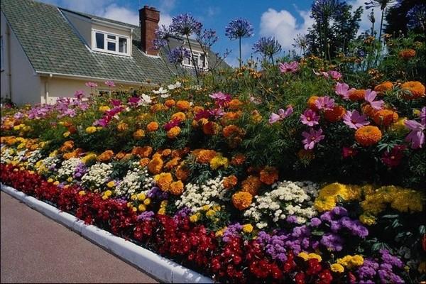 Compact Sonunda, Güzel Bir Çiçek Bahçesi Oluşturmak