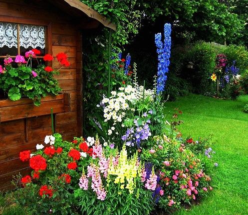 Contemporary Süslemeleri Ev Peyzaj Bahçe için  Bitki Seçimi İpuçları