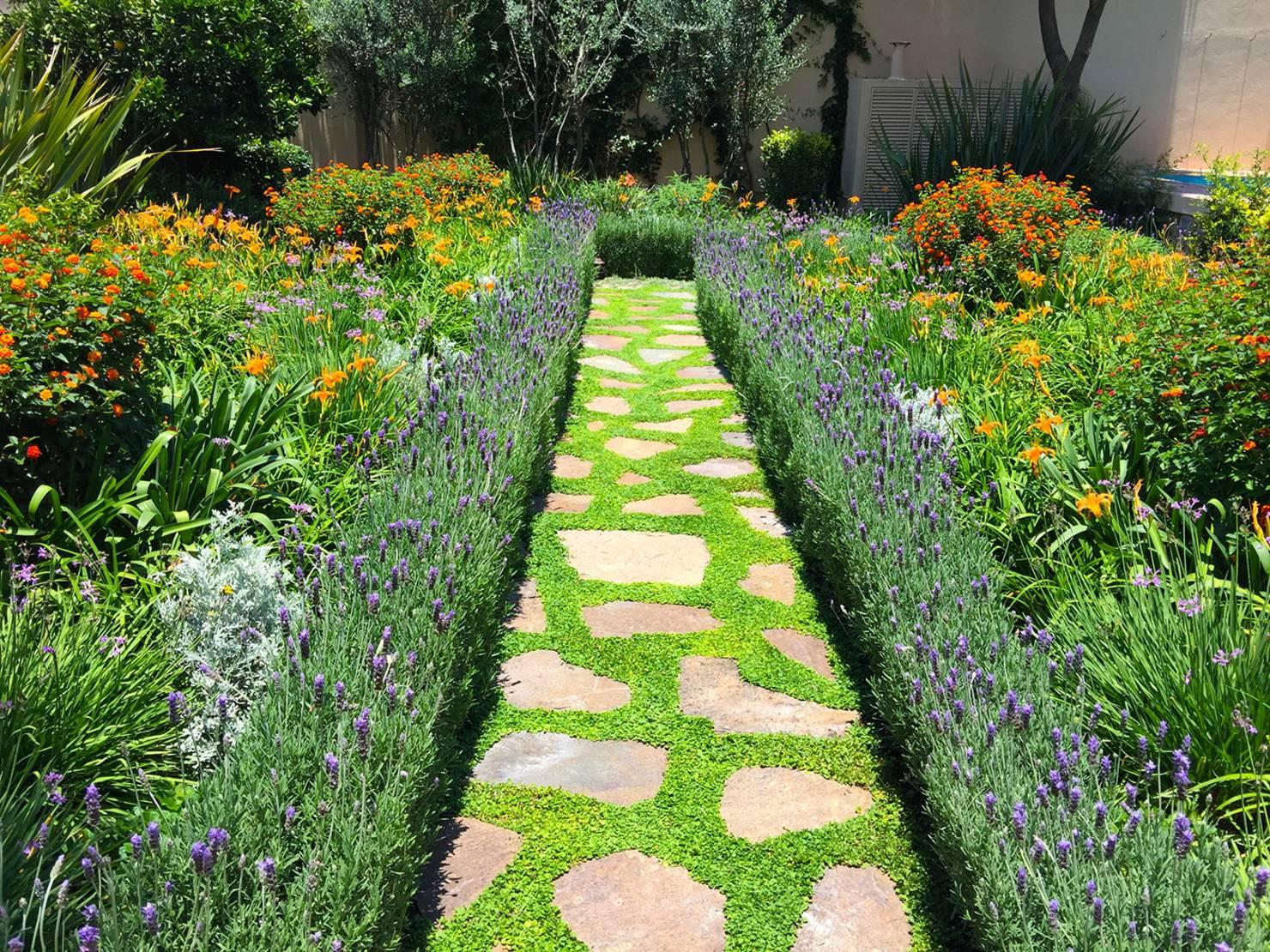 Cool Çalı Ev Peyzaj Bahçe için  Bitki Seçimi İpuçları