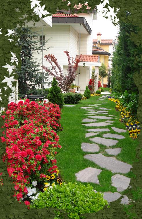 Cozy çim Ev Peyzaj Tasarımı