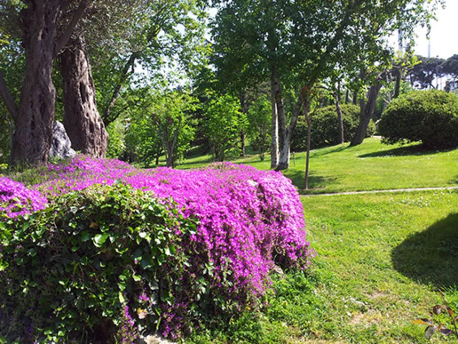Images of Renkli Ev Peyzaj Bahçe için  Bitki Seçimi İpuçları