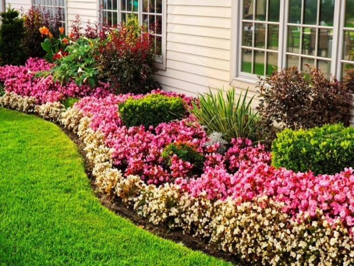 Pictures of Çiçek Güzel Bir Çiçek Bahçesi Oluşturmak