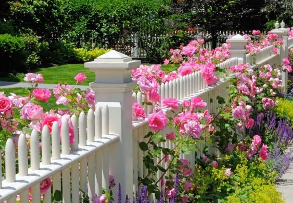 Stylish Farklı Güzel Bir Çiçek Bahçesi Oluşturmak